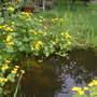 Beautiful_pond_005