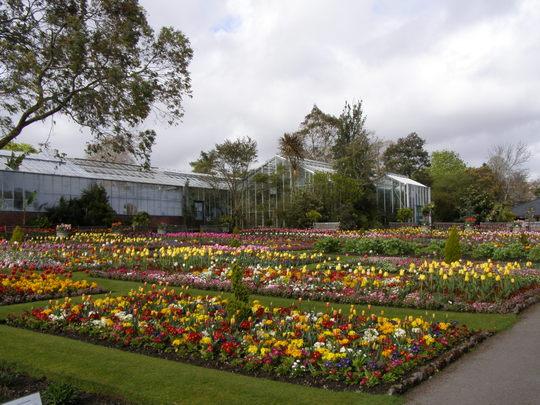 Singleton park botanical flower beds