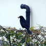 A Black Bird On The Garden Wall