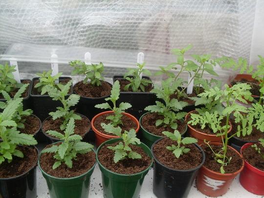Plants a-waiting