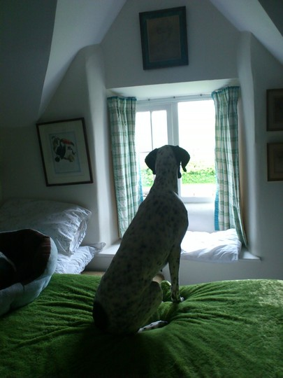 Sluggy at the window