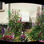 Lous garden