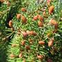 Arboretum_tesarske_mlynany_rhododendrony_031