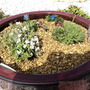 Alpine Container