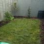 Garden - coming along nicely