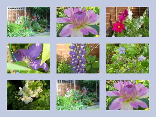 Flowers Summer 2011