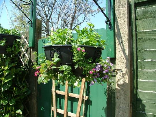 Hanging Basket,