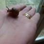 Very lucky snail!