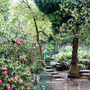 In_the_garden_7_5_2012_026