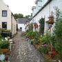 Container garden, Cromarty, Black Isle