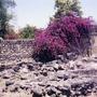 The_Desert_will_Bloom_.jpg