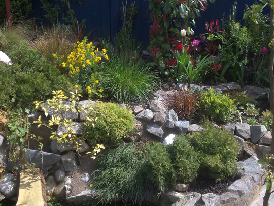 conifers , grasses
