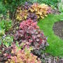 Heuchera Border 9 months on...