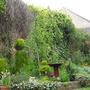 Garden today (Cupressus macrocarpa (Monterey Cypress))
