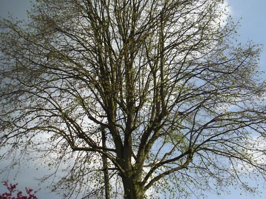 My trees
