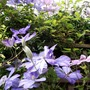 Garden_1_6_10_001