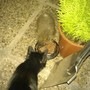Cocoa sharing his food with Mrs Tiggy Winkle!