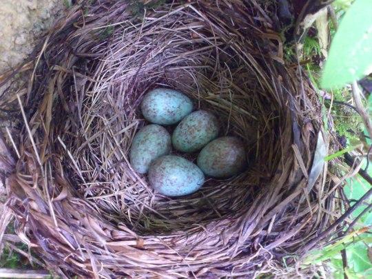 Blackbird's been busy!