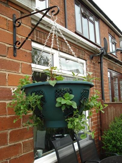 this years hanging basket