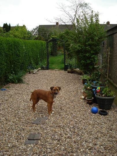 Gravel garden + dog lol