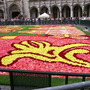 Brussels Carpet of Flowers 2010