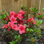 Flowers_2012_028