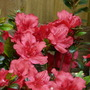 Flowers_2012_031