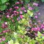 Garden_may_2012_004