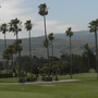 Sunol Country Club Palms, San Francisco Bay Area. (Washingtonia robusta - Mexican Fan Palm)