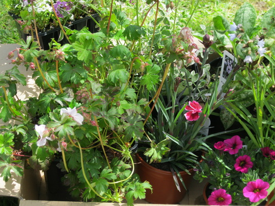 Went to the garden centre for 2 plants - whoops!!