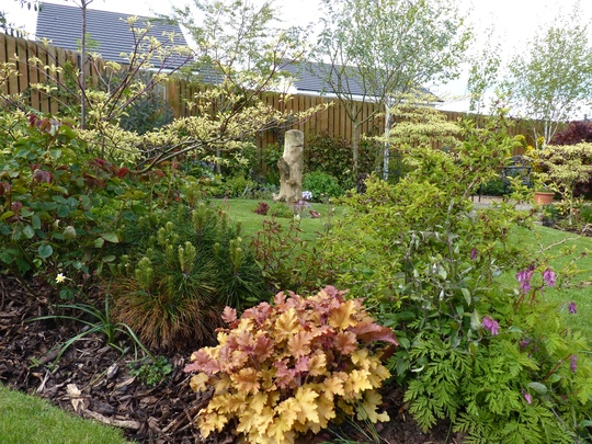Heuchera Marmalade and view of lawn area behind
