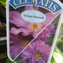 Clematis Vyvyan Pennell (Vyvyan Pennell)