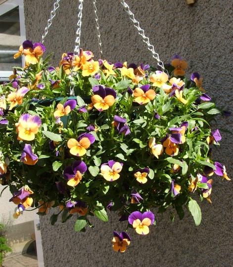 Easy plant hanging basket