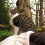 Cat_seat