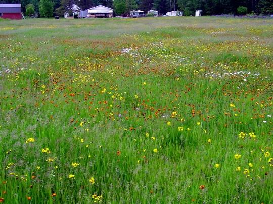 Wild Flowers On My Land