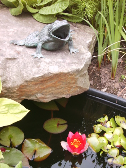 Phillius Frog and Water Lilly