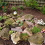 the new rockery....alpines coming along nicely....