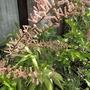 25_may_2012_010