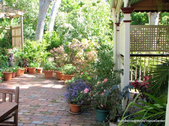 End-of-Autumn Downunder - Courtyard garden view