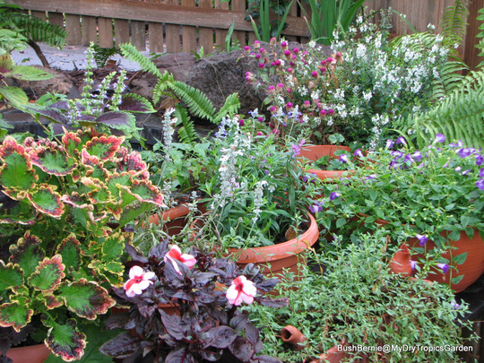 End-of-Autumn Downunder - Potted plants in courtyard garden