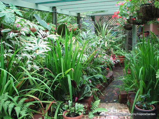 End-of-Autumn Downunder - shadehouse garden view