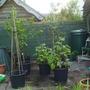 My Mini Orchard