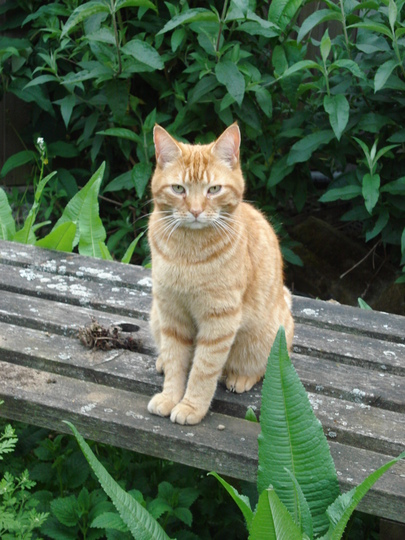 Toffee 'supervising'