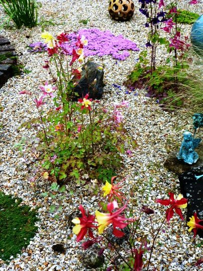 A part of my gravel garden with Aquilegia and Thyme