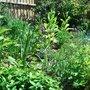 'Cottage garden' update