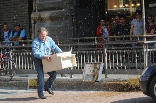 Hooray, the bee expert arrives!