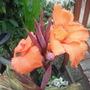 allsorts garden 013