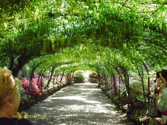 Bodnant Gardens Laburnum Arch
