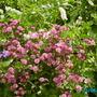 Our_garden_002