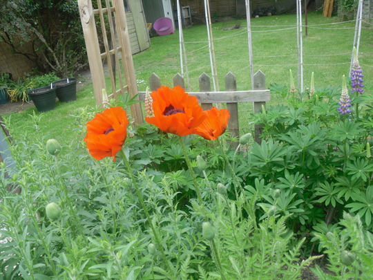 cottage garden may 12 040